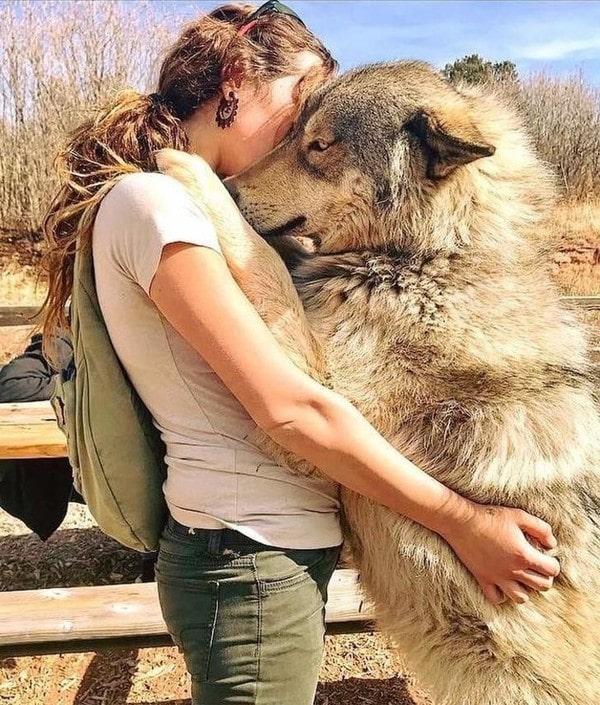 mua chó lai sói ở đâu